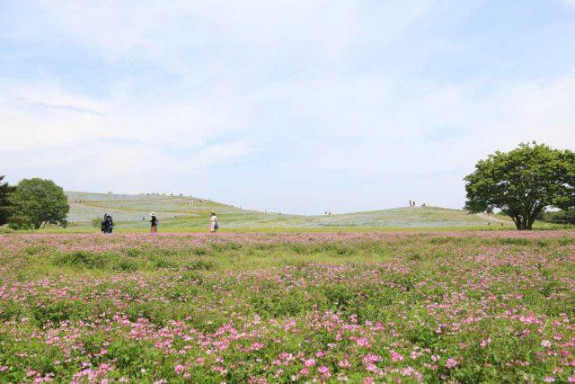 みはらしの丘+お花畑