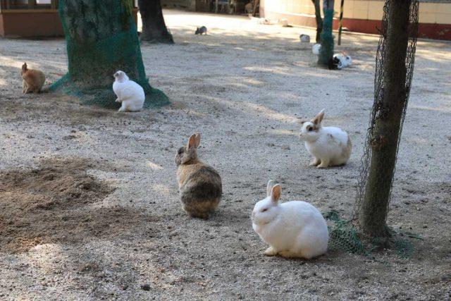 りすとうさぎの小動物園