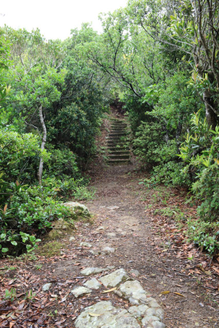 金山展望台への登山道