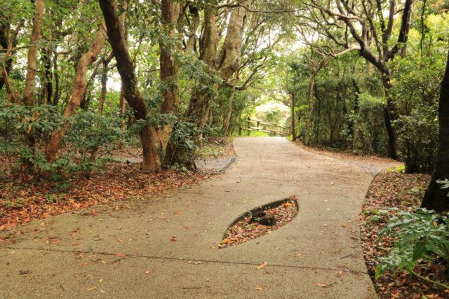 海金剛への遊歩道